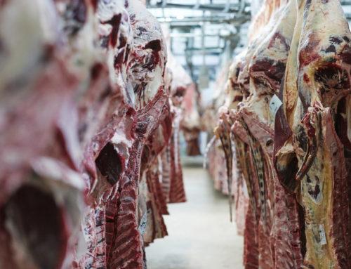 Notre démarche de qualité d'abattage des bovins